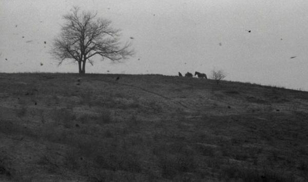 O cavalo de Turim 6
