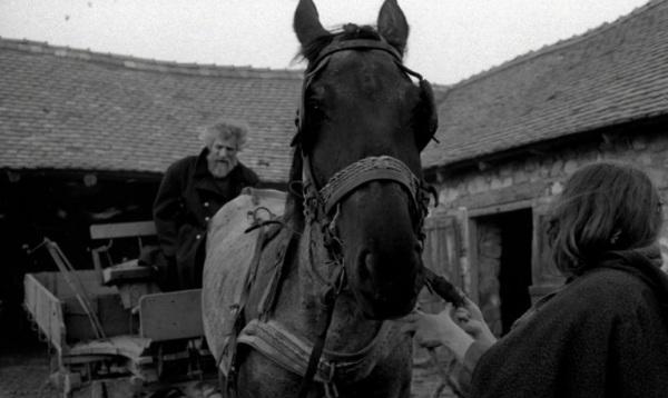 O cavalo de Turim